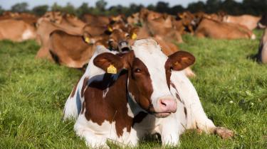 Økologi,dyrevelfærd og den gode historieer blevet faktorer, som forbrugerne gerne vil betale for.