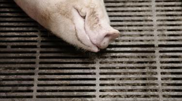 »Man kan ikke på én gang gå i læderjakke og kræve andre mennesker straffet for at bolle en ko. Det er enten-eller. Har vi først gjort dyr til subjekter, som kan voldtages, kan vi naturligvis heller ikke forsvare at spærre dem inde og slå dem ihjel efter forgodtbefindende,« skriver Mathias Sindberg i denne klumme.