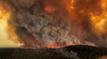 Bushbrande er almindelige om sommeren i Australien, men i år har de antaget mangedoblede proportioner som følge af langvarig tørke og andre effekter af de igangværende klimaforandringer.