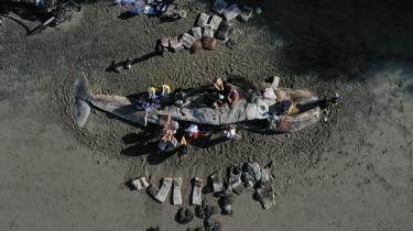 Forskere undersøger en af syv strandede hvaler i Californien i april 2019. Plastikaffald i verdenshavene udgør et større og større problem for flere og flere havdyr, og strandinger som den i Californien blev almindeligt forekommende i 2019, hvor plastfyldte hvaler skyllede op så forskellige steder somi Wales, Filippinerne, Indonesien, Italien og USA.