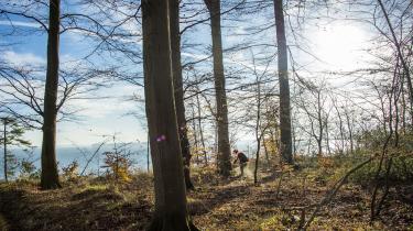 Coops forslag hviler på en antagelse om, at når der skal fremstilles papir, så kører nogen bare ud og fælder vores skove. Selv et skolebarn burde vide, at det er forkert, for skovdrift fælder ikke skove – den vedligeholder skove, skriver dagens kronikør.