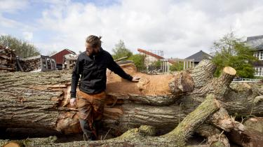 Den økologiske landsby Dyssekilde i Nordsjælland, lægger vægt på økologi, bæredygtighed, fællesskab og tolerance. Her er man for eksempel fælles om køkkenhaverne.