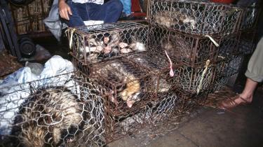 Ligesom SARS-udbruddet i 2003 kan coronaepidemien føres tilbage til Kinas såkaldte wet markets – det er udendørsmarkeder, hvor man kan købe levende dyr, der dræbes og slagtes på stedet for kunderne. På billedet ses levendeindiske civetter pået madmarked i Xin Yuan, Kina.