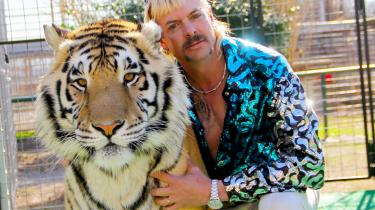 »Det skøre i Tiger King er ikke skægt, men derimod så hjernedødt trist, som kun en pærevælling af social nød, udstødthed, stofmisbrug, dyremishandling, grådighed, narcissisme og vold kan være det.«