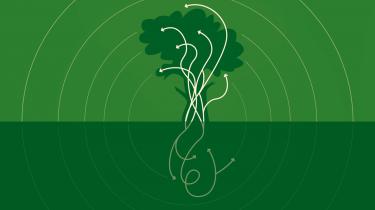Træer er afgørende for vores klima. Med fotosyntesen suger de CO2 fra atmosfæren, som de lagrer i stammer og grene, og herudover kan de eksempelvis anvendes som bæredygtigt byggemateriale. I denne uges afsnit af Informations klimapodcast fortæller seniorforsker Thomas Nord-Larsen fra Københavns Universitet om træers fantastiske grønne potentiale