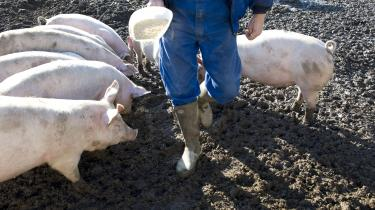 En stor del af den soja, der bruges i dansk svinefoder, importeres fra Sydamerika, og en stor andel af den soja kan være fra områder, hvor regnskov er blevet fældet for at dyrke den proteinrige afgrøde, viser en ny rapport.