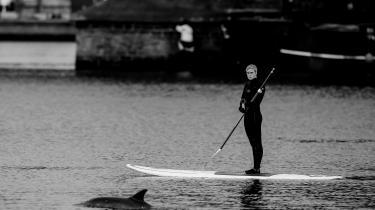 Det var næppe faren for at møde en svensker, der i ugens løb fik en besøgende delfin til at vælge Limfjorden frem for Øresund.