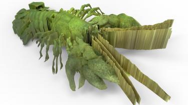 Kristoffer Ørums installation Signal_Krebs er bygget op som en parodi på naturhistorisk formidling. Værket består af hidsiggrønne krebsefigurer, små tekster og videoer, og Ørum har udstyret krebsene med sci-fi-lignende egenskaber, og på den måde bliver de en parallel til de fabeldyr, som kartograferne i gamle dage indsatte på de dele af søkortet, man endnu ikke kendte til.