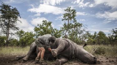 Som konsekvens af befolkningstilvækst og øget forbrug af ressourcer, vil vi fortsætte med at ødelægge den naturlige verden, siger professor Charles R. Marshall. »Så vil vi se langt højere udryddelsesrater.« Her er et næsehorn blevet dræbt på grund af sine horn i Sydafrikas Kruger National Park.