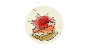 Marsvinekalve skal op i vandoverfladen og hente luft lidt oftere end deres voksne artsfæller, og på en sejltur i Fænø Sund kom de helt tæt på naturvejleder Rikke Vesterlund og hendes mands båd