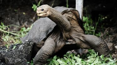 Ensomme George var den sidste kendte skildpadde af arten 'Pinta Island Tortoise', da den døde i 2012 på Galapagos. Ny rapport tegner ildevarslende for verdens biodiversitet. Ud af 20 mål fra 2010 er ingen opfyldt her i 2020.