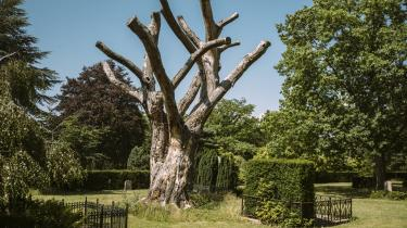 Solbjerg Parkkirkegård på Frederiksberg var en typisk københavnsk assistenskirkegård, da den blev etableret i 1865, fordi der ikke var mere plads omkring kirkerne. Nu er den tidstypisk, fordi man midt i alt det vinkelrette og trimmede ser elementer af natur, der passer sig selv, eksempelvis dette døde, insektomsværmede, svampebeklædte træ.