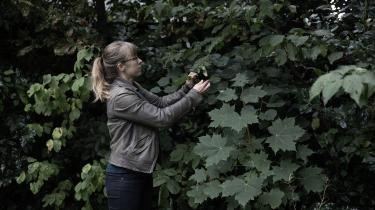 »Du kommer automatisk til at se naturen i din have, hvis du begynder at spørge, hvad den har brug for. Det er en ny forbindelse. Så skal I jo samarbejde,« siger Rikke Milbak fra Vild med Vilje