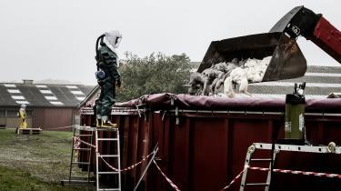 Fødevarestyrelsen i gang med at aflive minkavler Tommy Vemmelunds godt 19.000 mink ved Give i Jylland.