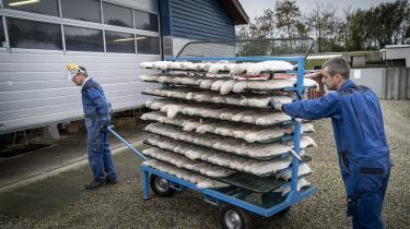 Danske minkavlere er i fuld gang med at aflive alle deres mink, efter at statsminister Mette Frederiksen i sidste uge beordrede alle danske minkbesætninger aflivet. Det viser sig, at det er der ikke lovhjemmel til endnu.