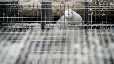 Juridiske eksperter mener, at Justitsministeriet burde have forhindret statsministeren i at kræve alle mink aflivet.