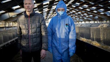 Statsminister Mette Frederiksen mener ikke, regeringen har brudt grundloven. Det gør til gengæld flere jurister. Her ses statsministeren på besøg på Peter Hindbos minkfarm ved Kolding.