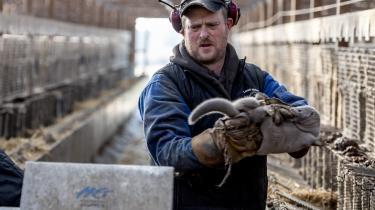 Den 4. november blev det besluttet, at alle mink i Danmark skulle aflives. Her er vi på besøg på Vilsbæklund minkfarm ved Brovst.
