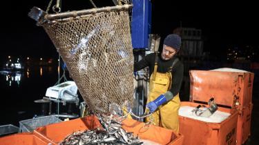 Fiskeriet er et godt eksempel på et erhverv, hvor EU og Storbritannien har brug for hinanden og bør være pragmatiske, mener økonomen Gabril Felbermayr.