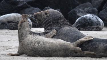 Et søløvepar gør gensidige tilnærmelser. Dyreverdenens seksualitet er langt mere forskelligeartet og mindre bundet af konventioner end menneskets, skriver den franske biolog.