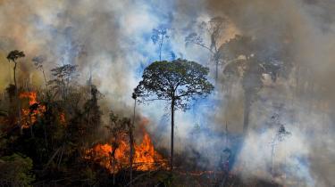 Træer opsuger CO2 meget langsommere end afgivelsen ved den fossile afbrænding. Og skove kan brænde og derved frigive deres CO2-lager, som vi har set det ved de voldsomme skovbrande sidste år i Arktis, Californien og Australien. Verden har brug for massiv, ekstra skovrejsning, der ikke skal kompensere og legitimere fortsatte fossile udledninger.