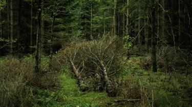 Det vigtige er, at vi producerer træet lokalt så meget som muligt, lyder det fra Maria Dahl Hedegaard fra brancheorganisationen Dansk Fjernvarme i denne serie, hvor Information stiller skarpt på biomassens fremtid i Danmark.