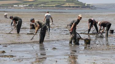 På grund af Brexit er der stor risiko for, at de mange udenlandske arbejdstagere, der har forladt Storbritannien under pandemien, ikke kommer tilbage. Her samler immigrantarbejdere skaldyr ved Angle Bay i Pembrokeshire, Wales