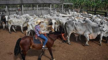 Problemet er ifølge Greenpeace, at der foregår en stor handel internt mellem forskellige brasilianske kvægfarme, der betyder, at det bliver nemmere at sløre, hvor kvæget oprindeligt kommer fra