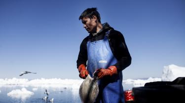 På tirsdag går grønlænderne til et valg, der stiller dem over for store dilemmaer på klima- og miljøområdet. Det omdiskuterede mineprojekt i Kvanefjeld tvinger politikerne til at balancere økonomiske gevinster mod miljømæssige risici og lokale CO2-stigninger mod globale reduktioner. Resultatet af deres beslutninger kan få vidtrækkende konsekvenser – ikke bare for Grønland, men for hele verdens grønne omstilling