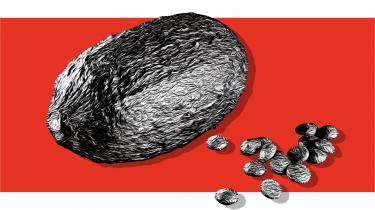 Chokolade handler både om umådelig nydelse og ufattelig lidelse. Industrien er stadig præget af tvangsarbejde og børneslaveri, men de store brands med ondt i etikken udfordres i stigende grad af små producenter, der lægger vægt på transparens og lokal forankring. En af dem er Henrik Bodholdt, der tog rejsen fra Vestegnen til en kakaoskov i Costa Rica