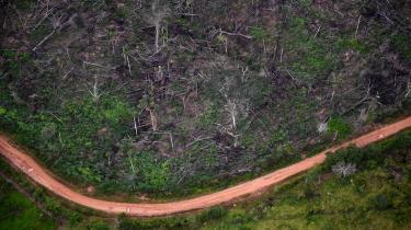 Billedet viser illegal skovrydning i nationalpark i Colombia. Ideen om, at netto-nul er licens til en hensynsløs og nonchalant 'afbrænd nu, betal senere'-tilgang, har ført til, at CO2-udledningerne forsat stiger. Den har dermed også fremskyndet ødelæggelsen af naturen via tiltagende skovrydning.
