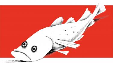 En af grundstammerne i enhver madkultur er at kontrollere og forædle fordærvet. Coronakedsomhed har lært mange af os at sylte og fermentere, og nu er det tid til at udfordre den måske stærkeste friskhedsmyte af dem alle – den, der omgærder fisken