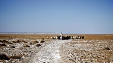 En fårehyrde går med sine får i en afghansk ørken. Klimaforandringerne har givet afghanerne mere tørke, flere oversvømmelser og deraf følgende fødevareusikkerhed, som truer over 11 millioner afghaneres fremtid.