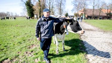 80 procent af støtten til landbrug i EU går til blot 20 procent af landbrugene – typisk store landbrugsvirksomheder. Her er det en tysk landmand, der netop har sendt sine køer på græs.