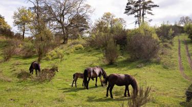 På 120 de hektar går små flokke af heste rundt og græsser. Det er de vildeste heste i Danmark, og de har udløst en af den vildeste konflikt om dyrevelfærd.
