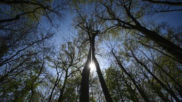 Lørdag indvies Søbakke Skovbadeskov i Tilst ved Aarhus. Skovbadning handler ikke om at bade i en skov, men om at bade sig i »sanseindtrykkene fra skoven«.