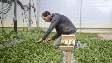 Erfaringerne fra GM-afgrøder på globalt plan viser, at der er behov for en balanceret patentlovgivning, skriver dagens kronikør.
