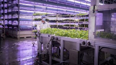 I Taastrup finder man en ny type landmand, som snart kan kalde sig indehaver af Europas største vertikale farm, hvor planterne vokser i etager om natten. Der er tale om et marked i kraftig vækst – og nogle mener, den alternative dyrkningsform kan være fremtidens klimavenlige landbrug