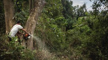 En arbejder iMyanmar fælder et træ. Myanmar er et af de lande, hvorfra der importeres ulovligt træ. Selv om europæiske lande siden 2013 har været forpligtet til at sikre, at det træ, de importerer til EU, er lovligt, er det ikke alle lande, der håndhæver loven tilstrækkeligt.