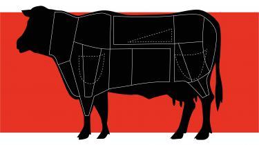 Der bliver sjældent talt pænt om malkekøer i kulinarisk sammenhæng. Men det er egentlig lidt tarveligt, for med den rigtige behandling besidder kødet store gastronomiske kvaliteter, ligesom det letter på både klimaregnskab og økonomi. Det er Michelin-kokken, forædleren og forskeren enige om