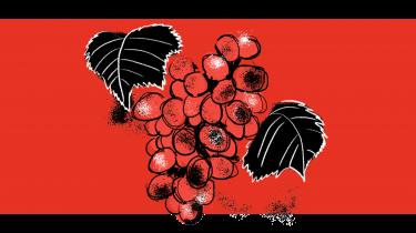 For over 150 år siden tvang en mikroskopisk lus vinindustrien i knæ, og nu er svampesygdomme i følgeskab med klimaforandringerne ved at gøre det samme. Løsningen var både dengang og nu at ændre vinstokkenes dna