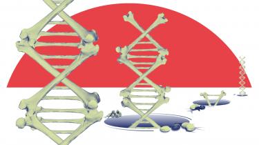 For et årti siden begyndte genetikere at trække fortids-dna ud af gamle knogler og komme med bombastiske konklusioner om menneskets forhistorie. Imens stod arkæologerne på sidelinjen og så, hvordan deres kundskab blev verfet til side. To meget forskellige videnskaber var på kollisionskurs