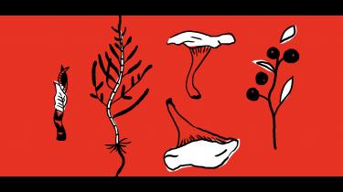 Sankning – indsamling af planter, urter og bær i naturen – er kommet i høj kurs, og urterne vinder i stigende grad indpas uden for Michelinrestauranterne. Det handler både om nye smagsoplevelser og et nyt natursyn