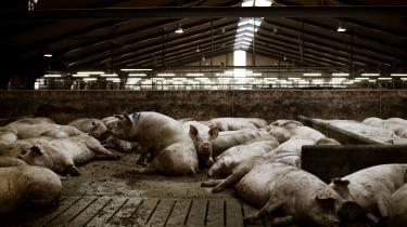 Med den nuværende kurs forventes landbruget i 2030 at stå for knap halvdelen af de danske CO2-udledninger. Det er ifølge flere fagfolk derfor vanskeligt at forestille sig klimalovens succes uden markante reduktioner fra svin, kvæg og marker.