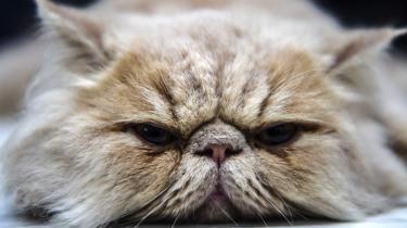 Katten har meget at lære filosofien, særligt i en tid, hvor ingen forkromede tilværelsesforklaringer længere slår til, lyder budskabet i en ny bog