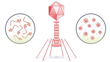 Virus har hverken celler, stofskifte eller evne til at formere sig ved egen hjælp. De små bæster er ikke engang rigtig levende. Alligevel er de mere talrige end nogen andre væsener på kloden og langt hen ad vejen vores venner – bortset fra, når de dræber os. Nu har vores kamp mod dem ført til en regulær vaccinerevolution