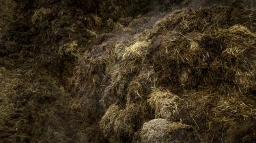 Flere biogasanlæg har så høje metanlæk, at de ifølge flere eksperter formentlig ikke længere har nogen klimagevinst. Her ses en blanding af halm og kolort, såkaldt dybstrøelse.