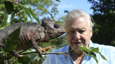 I seks årtier har Sir David Attenborough skrevet, produceret og – ikke mindst – lånt sin stemme til banebrydende naturhistoriske dokumentarer. På søndag fylder han 90 år