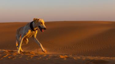 NASA planlægger at sende mennesker til Mars i 2030. Men hvad stiller vi op med vores hunde, når vi tager af sted på den stressende, hårde tur? Og hvad skal hunden gøre med sin lugtesans, når den svæver rundt i en rumdragt?