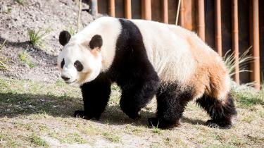 Københavns Zoo bortredigerede i forbindelse med åbning af panda-anlægget Taiwan fra et verdenskort efter en kinesisk henstilling, skriver Radio24syv.